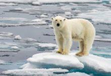 Photo of Масштабная экспедиция. «Роснефть» и ученые изучат краснокнижных животных»
