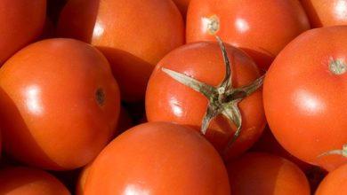 Photo of Какими опасными вирусами могут болеть томаты?»