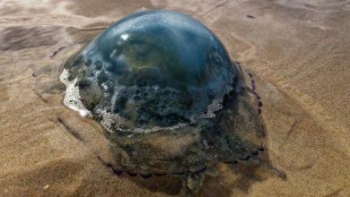 Photo of В Гидрометцентре рассказали, что привело к нашествию медуз на Азовском море»