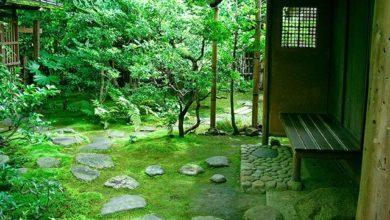 Photo of От мха и бамбука до огорода в квартире. 5 тенденций садового дизайна»