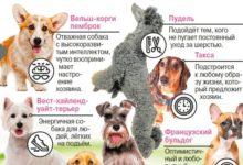 Photo of Топ-10 пород собак для жителей города. Инфографика»