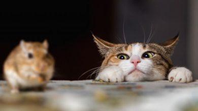 Photo of Кыш, мышь! Как сделать дом непривлекательным для грызунов?»