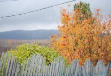 Photo of Когда в Москву придет осень?»
