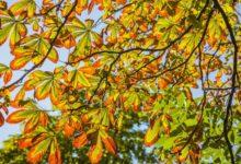 Photo of В какие регионы в сентябре придет аномальное тепло?»