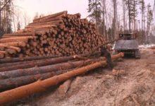 Photo of Можно ли восстановить вырубленный лес?»