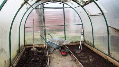 Photo of От уборки урожая до выбора саженцев. Чем заняться на даче в октябре»