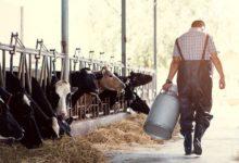 Photo of Молоко за вредность. Правда ли, что оно спасает от «заводских» болезней?»
