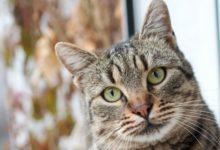 Photo of В Нидерландах намерены судить хозяев кошек-охотников»