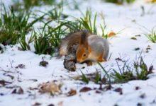 Photo of Синоптики предсказали температурные аномалии предстоящей зимы»