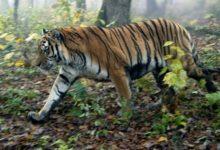 Photo of WWF: в РФ за полвека не исчез ни один вид диких животных»