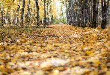 Photo of Чем может быть опасна опавшая листва?»