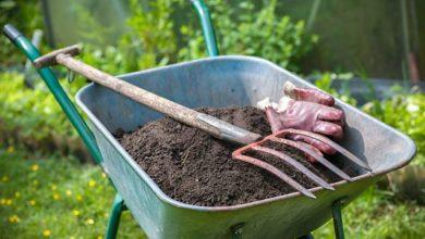 Photo of Кбогатому урожаю. Зачем удобрять грядки осенью?»