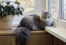Photo of Какие комнатные растения опасны для кошек и собак?»