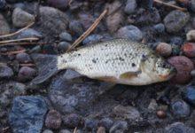 Photo of Будут ли рыбы ходить?»
