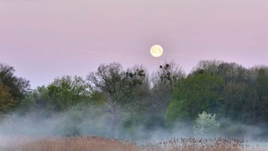 Photo of Лунный календарь садовода иогородника с 22 сентября по 8 октября»
