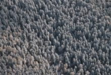Photo of ВНИИ ГОЧС назвал главные причины гибели сибирских лесов»