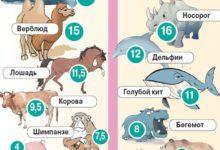 Photo of Сколько длится беременность у животных? Инфографика»