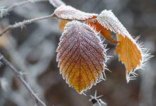 Photo of В каких регионах ожидаются заморозки?»