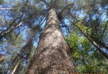 Photo of Каких деревьев в России больше всего?»