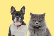 Photo of Блёклая движуха. Каким видят окружающий мир кошки и собаки?»