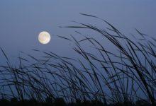 Photo of Лунный календарь садовода иогородника с 21 октября по 9 ноября»