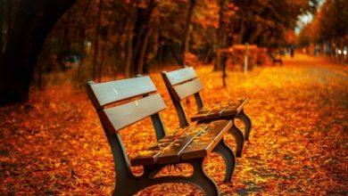 Photo of Что за необычную погоду прогнозируют в пятницу, 23 октября?»
