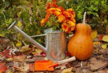Photo of Надо ли поливать деревья, кустарники и цветы перед заморозками?»
