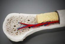 Photo of Мозг, но не тот. Как работает костная ткань в организме?»