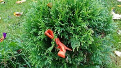 Photo of Осенняя посадка: внимание на декоративные деревья и кустарники»