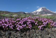 Photo of Ученые предупреждают о возможности извержения вулкана на Камчатке»