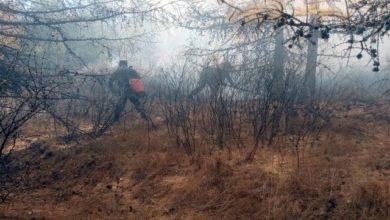Photo of Вильфанд: сезон лесных пожаров в РФ завершится в ноябре»
