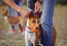 Photo of Как выбрать собаку и кому не нужен намордник? 12 вопросов кинологу»