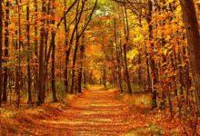Photo of В каких регионах ожидается аномально теплая середина октября?»