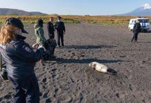 Photo of Что стало причиной массовой гибели морских животных на Камчатке?»