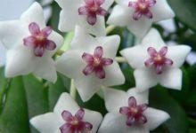 Photo of Какие комнатные цветы могут быть ядовиты?»