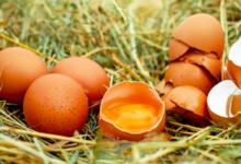 Photo of Правда ли, что яйца способствуют развитию сахарного диабета 2-го типа?»