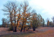 Photo of Что такое «украинская осень»?»
