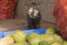 Photo of Может ли кошка стать вегетарианцем?»