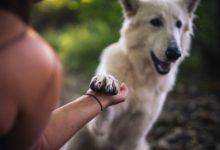 Photo of Какие породы собак самые древние?»