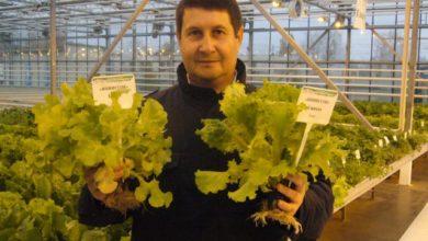 Photo of Как вырастить зимой зелень для салата?»