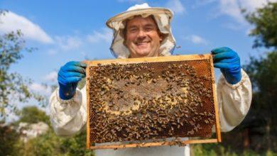 Photo of Получи свой мед. Как заняться пчеловодством на даче?»