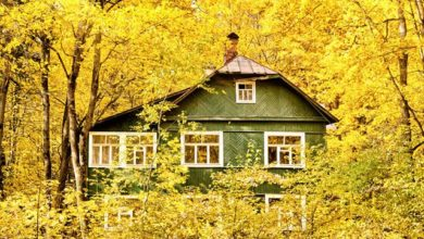 Photo of Календарь дачника-2021: Октябрь»