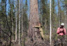Photo of Назван возраст самого старого дерева в России»