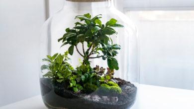 Photo of Сад в банке. Как сделать флорариум?»