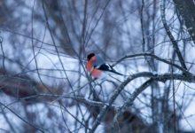 Photo of Небольшой снег и до пяти градусов мороза ожидаются в Москве 24 декабря»