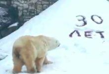 Photo of В Московском зоопарке белому медведю Врангелю исполнилось 30 лет»
