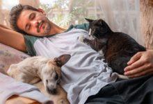 Photo of Протянут лапу помощи. Какие болезни лечат домашние любимцы»