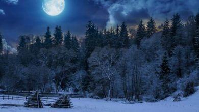 Photo of Календарь дачника-2021: Февраль»