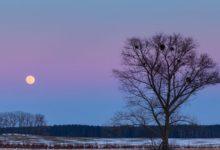 Photo of Лунный календарь садовода иогородника с 9 по 31 декабря»