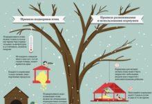 Photo of Как правильно кормить разных птиц зимой. Инфографика»